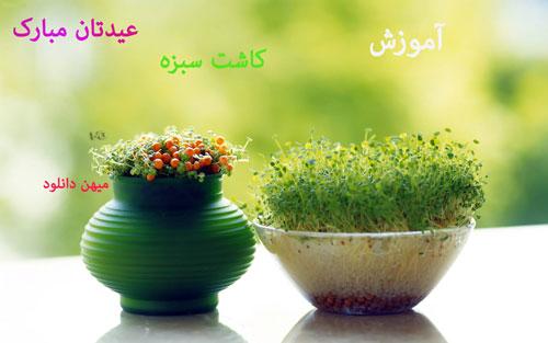 کاشت سبزه1 کلیپ آموزش کاشت سبزه نوروز ۹۳