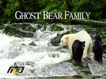 0036ca77 medium دانلود مستند BBC Natural World – Ghost Bear Family 2015
