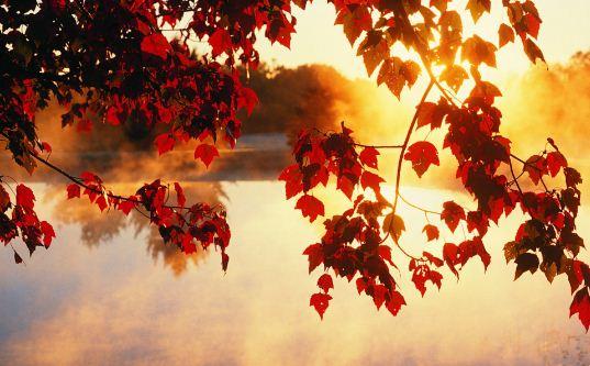 Autumn دانلود والپیپر پاییز