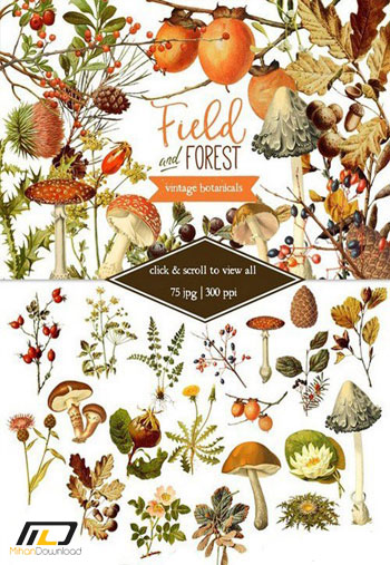 Field Forest Vintage Botanicals1 دانلود تصاویر لایه باز Field &amp Forest Vintage Botanicals