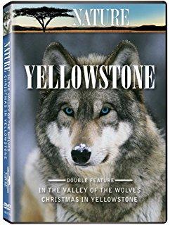 IMAX – Wolves 2001 1 دانلود مستند گرگ ها
