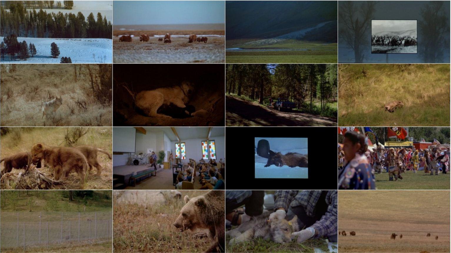 IMAX – Wolves 2001 2 دانلود مستند گرگ ها