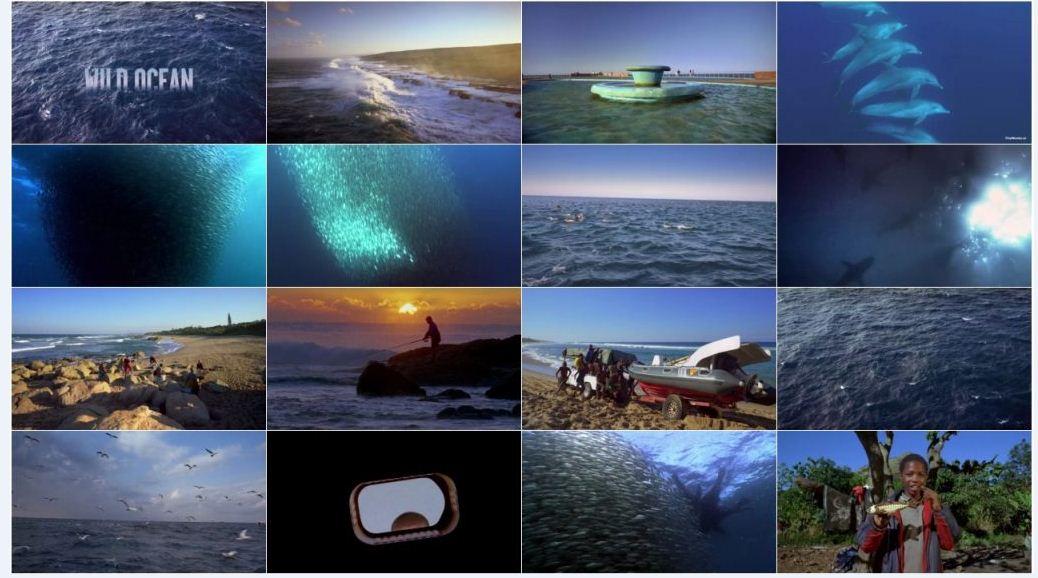 IMAX Wild Ocean 2 دانلود مستند IMAX: Wild Ocean