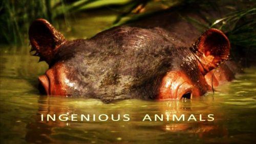 Ingenious Animals 1 دانلود مستند حیوانات باهوش