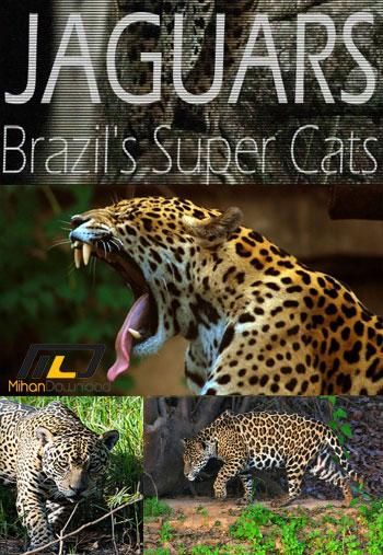 دانلود مستند  ۲۰۱۶ Jaguars Brazils Super Cats