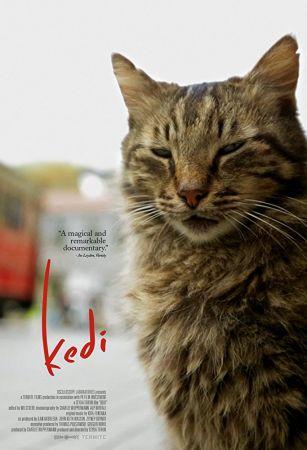 Kedi 2016 1 دانلود مستند گربه با دوبله فارسی
