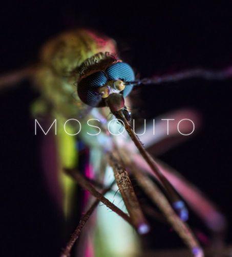 Mosquito 2017 1 دانلود مستند Mosquito 2017