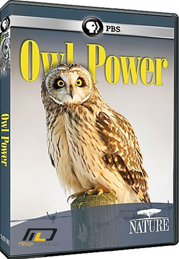 PBS NATURE Owl Power 2015 دانلود مستند PBS Nature Owl Power 2015