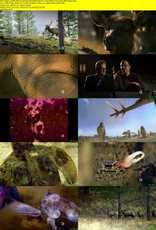 PBS NOVA Extreme Animal Weapons 2017 2 دانلود مستند سلاح های حیوانات افراطی