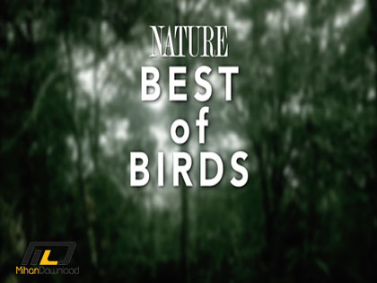 PBS Nature Special Best of  دانلود مستند بهترین پرندگان Nature Special Best of Birds 2014