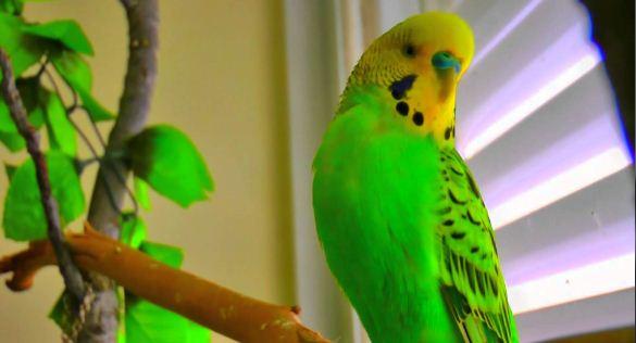 Parrots Wallpaper دانلود والپیپر طوطی