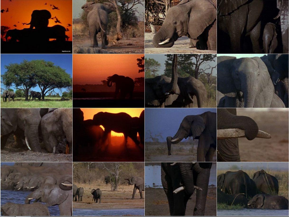 Reflections On Elephants 1994 2 دانلود دوبله فارسی مستند فیل ها