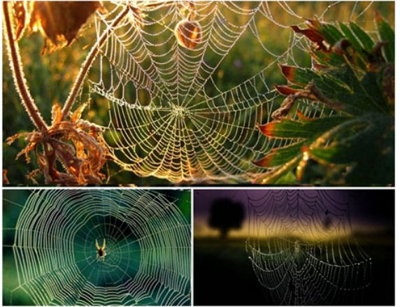 Spider Web Wallpapers دانلود والپیپر تار عنکبوت