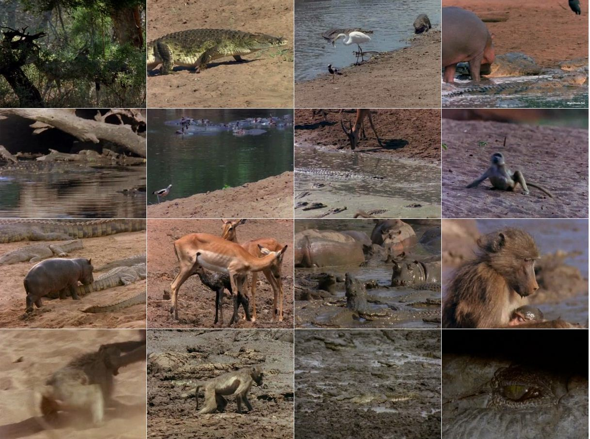 The Last Feast of the Crocodiles 1996 2 دانلود دوله فارسی مستند ضیافت کروکودیل ها