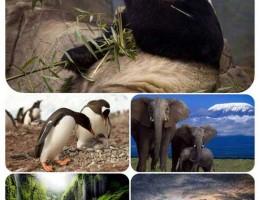 دانلود مجموعه والپیپر HD از طبیعت و حیوانات