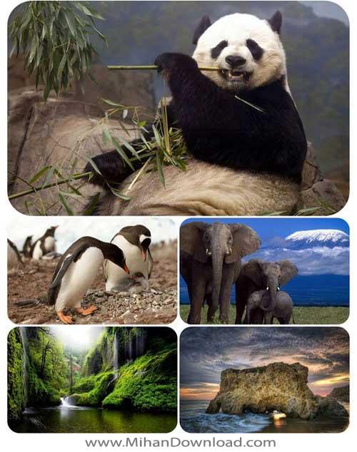 Untitled 132 دانلود مجموعه والپیپر HD از طبیعت و حیوانات