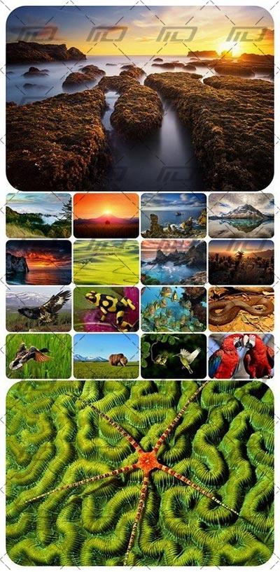 Untitled 6 دانلود 80 عکس با کیفیت با موضوع طبیعت و حیوانات