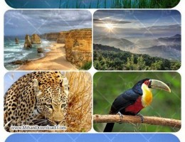 Wallpapers---Nature-and-animals-2