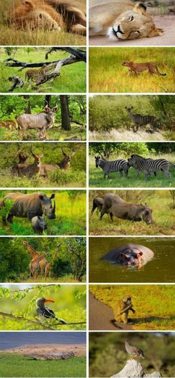 Wild Africa 356x768 دانلود تصاویر استاک غیر رایگان با موضوع حیات وحش آفریقا