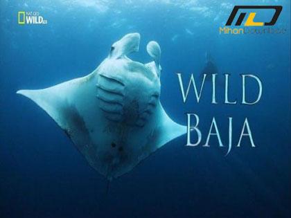 Wild Baja 2015 دانلود مستند Wild Baja 2015