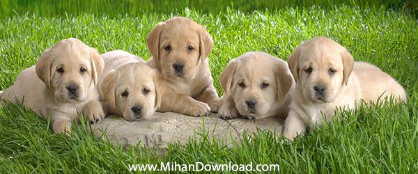 dog wallpaper collection small دانلود والپیپر سگ با کیفیت عالی