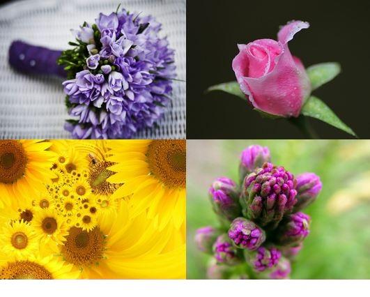 goolwallpapers دانلود والپیپر گل و گیاه