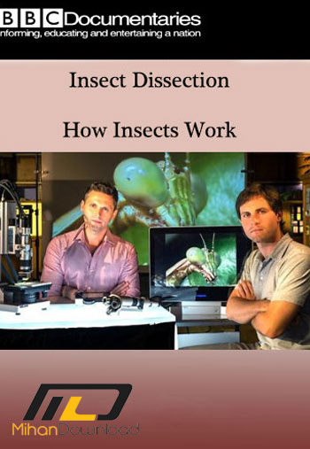 insect دانلود مستند Insect Dissection: How Insects Work 2015