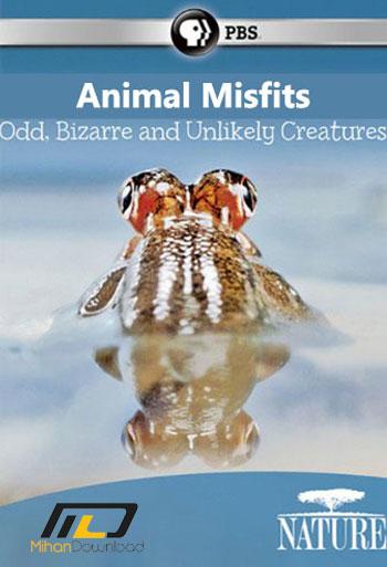 nature animal misfits dvd 3 دانلود مستند Animal Misfits 2014