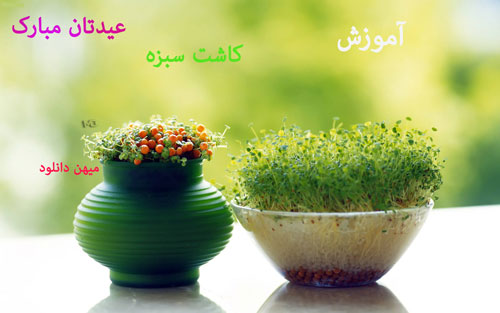 کاشت-سبزه