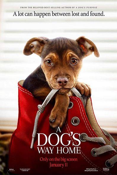 A Dogs Way Home 2019 1 دانلود دوبله فارسی فیلم دیدنی و جذاب A Dogs Way Home 2019