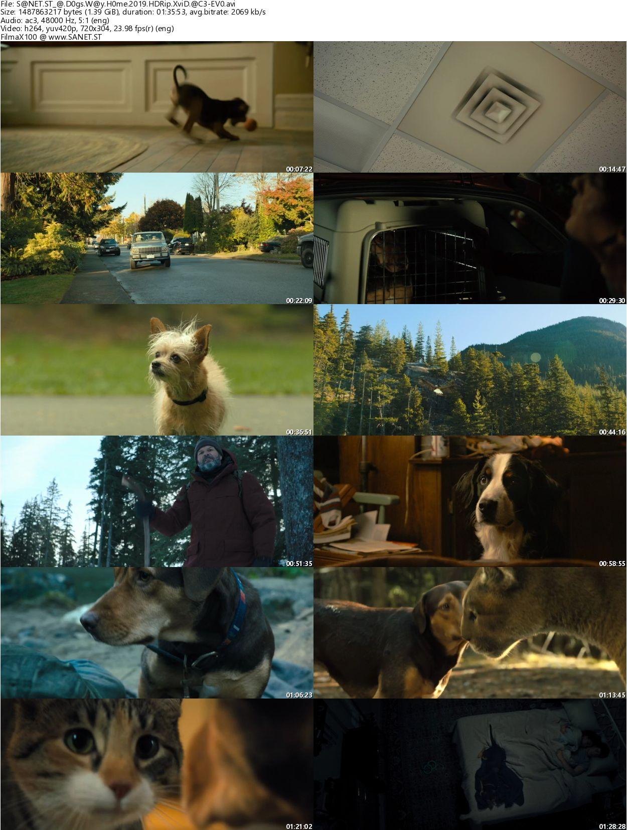 A Dogs Way Home 2019 2 دانلود دوبله فارسی فیلم دیدنی و جذاب A Dogs Way Home 2019