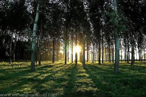 آموزش عکس برداری حرفه ای از بیرون و طبیعت