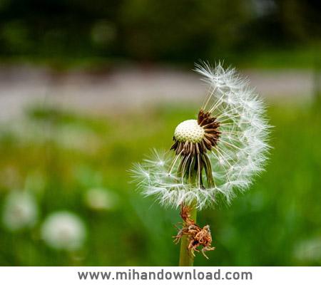 آموزش ویرایش عکس های گل ماکرو