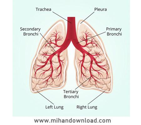 آموزش آناتومی سیستم تنفسی