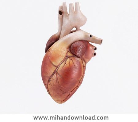 آموزش کامل آناتومی قلب