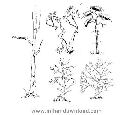 آموزش طراحی اسکیس درخت