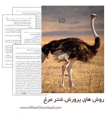 روش های پرورش شتر مرغ