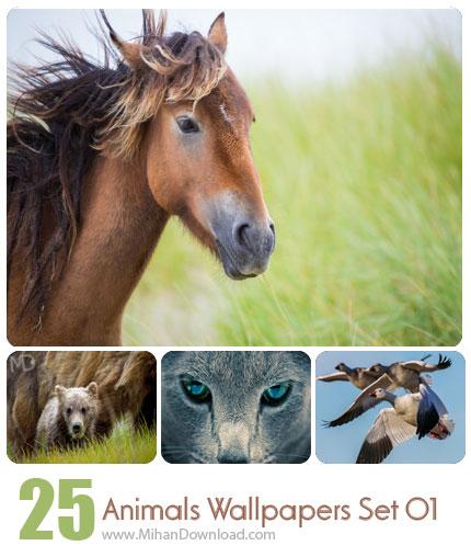 دانلود Animals Wallpapers Set 01 مجموعه اول از تصاویر حیوانات