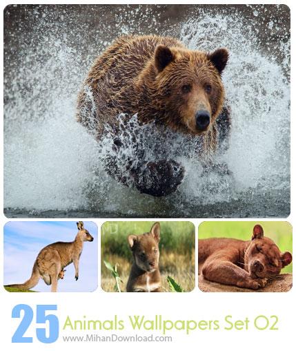 دانلود مجموعه عکس حیوانات Animals Wallpapers Set 02
