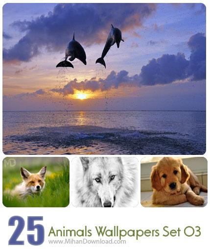 دانلود مجموعه عکس حیوانات Animals Wallpapers Set 04