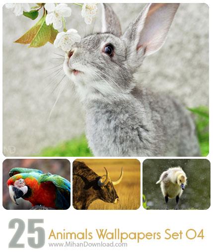 دانلود مجموعه عکس حیوانات Animals Wallpapers Set 05