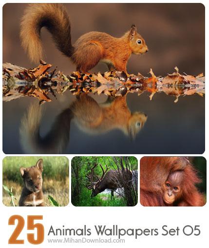 دانلود مجموعه عکس حیوانات Animals Wallpapers Set 06