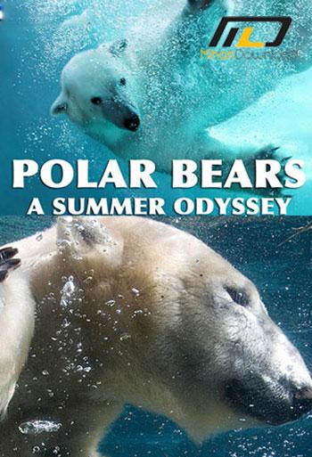 Polar-Bears-A-Summer-Odysse