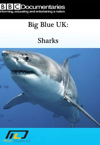 bigbluesharks